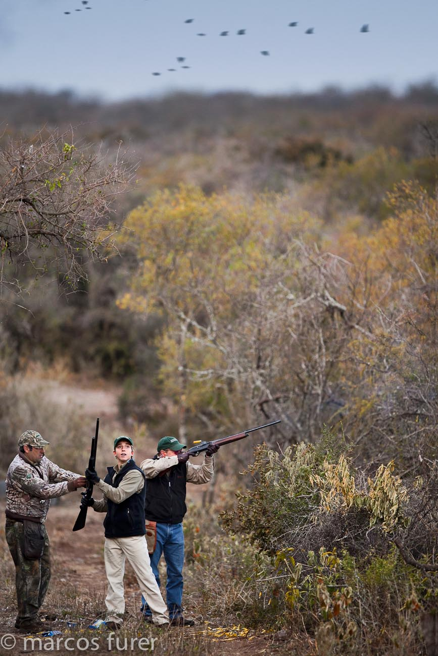Dove Hunting in Argentina Reloading shotguns bird hunting faq's argentina dove hunting faq's