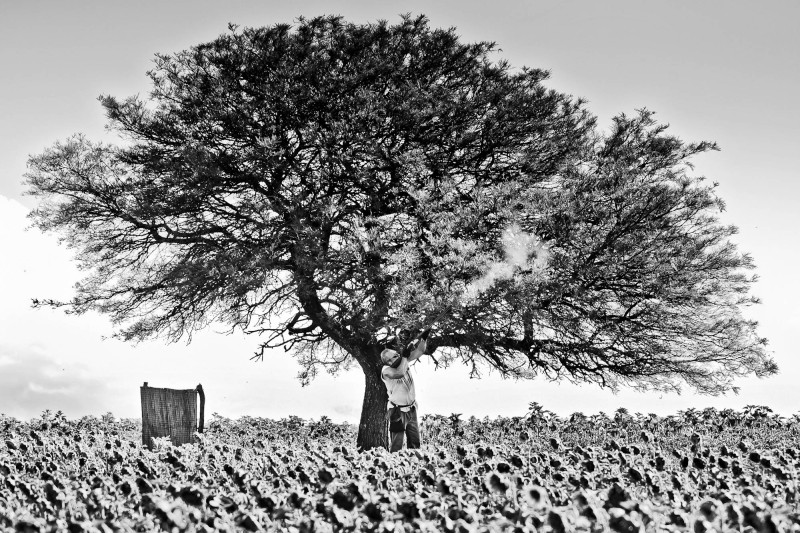 Argentina-Dove-Hunting---Shooter-Below-Tree